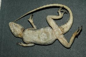 (Agama - R-099)  @14 [ ] Unspecified (default): All Rights Reserved  Unspecified Unspecified
