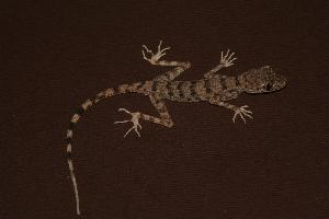 (Reptilia - RuHF-NR-319)  @16 [ ] Unspecified (default): All Rights Reserved  Unspecified Unspecified