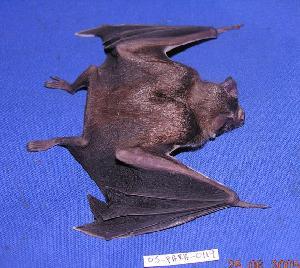 ( - 05-PARA-0119)  @14 [ ] Copyright (2005) Joseph A. Cook Museum of Southwestern Biology