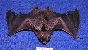 ( - 05-PARA-0124)  @13 [ ] Copyright (2005) Joseph A. Cook Museum of Southwestern Biology