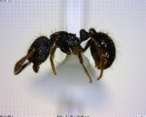 ( - BIOUG01155-E04)  @13 [ ] CreativeCommons - Attribution Non-Commercial Share-Alike (2011) M. Alex Smith Biodiversity Institute of Ontario
