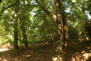 (Marasmiaceae - CTES SI-5-12)  @11 [ ] Copyright (2014) IBONE IBONE
