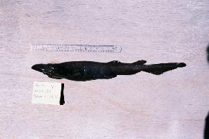 ( - BPS-0183)  @12 [ ] Copyright (2002) Samuel P. Iglesias Museum national d'Histoire naturelle
