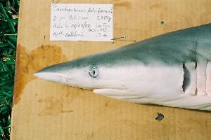 ( - BPS-0196)  @13 [ ] Copyright (2002) Samuel P. Iglesias Museum national d'Histoire naturelle