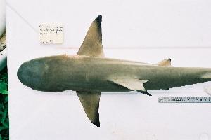 ( - BPS-0199)  @12 [ ] Copyright (2002) Samuel P. Iglesias Museum national d'Histoire naturelle