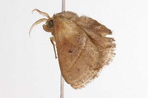 ( - ANIC Gen No. 000723)  @13 [ ] Copyright (2010) Australia National Insect Collection Australia National Insect Collection