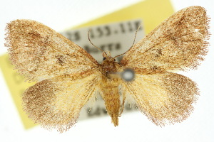 (Elassoptila - 10ANIC-02295)  @13 [ ] CreativeCommons - Attribution Non-Commercial Share-Alike (2010) Photography Group BIO/CSIRO