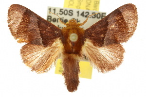 ( - 10ANIC-02413)  @14 [ ] CreativeCommons - Attribution Non-Commercial Share-Alike (2010) CSIRO/BIO Photography Group Centre for Biodiversity Genomics