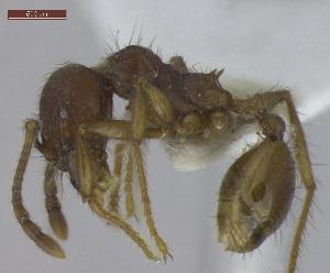 """( - T4S18A2009PNIA11)  @13 [ ] Copyright (2013) MACN Museo Argentino de Ciencias Naturales """"Bernardino Rivadavia"""""""