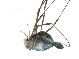 ( - BIOUG07161-E08)  @13 [ ] CreativeCommons - Attribution Non-Commercial Share-Alike (2013) G. Blagoev Biodiversity Institute of Ontario