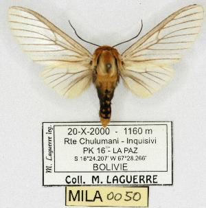 (Disconeura - MILA 0050)  @13 [ ] Copyright (2010) Michel Laguerre Research Collection of Michel Laguerre