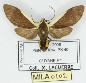 (Pryteria - MILA 0102)  @14 [ ] Copyright (2010) Unspecified Research Collection of Michel Laguerre