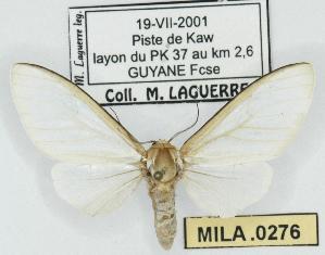 (Senecauxia - MILA 0276)  @13 [ ] Copyright (2010) Michel Laguerre Research Collection of Michel Laguerre