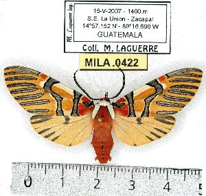 (Anaxita - MILA 0422)  @15 [ ] Copyright (2010) Unspecified Research Collection of Michel Laguerre