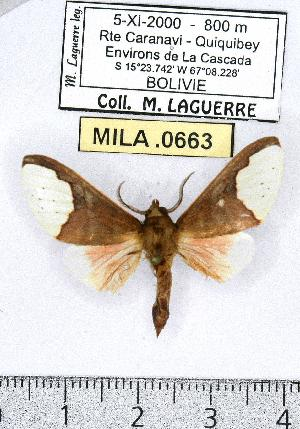 (Epimolis - MILA 0663)  @14 [ ] Copyright (2010) Unspecified Research Collection of Michel Laguerre