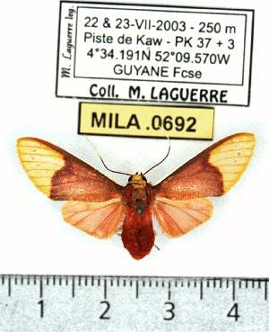 (Evius - MILA 0692)  @15 [ ] Copyright (2010) Michel Laguerre Research Collection of Michel Laguerre