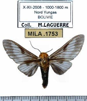 (Disconeura - MILA 1753)  @13 [ ] Copyright (2012) Michel Laguerre Research Collection of Michel Laguerre