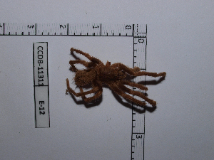(Ami - INB0004290985)  @14 [ ] Copyright (2012) C. Viquez Instituto Nacional de Biodiversidad