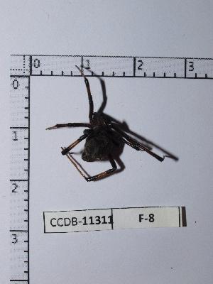 ( - INB0004328405)  @12 [ ] Copyright (2012) C. Viquez Instituto Nacional de Biodiversidad