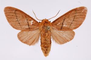 (Neidalia - INB0004038392)  @14 [ ] Copyright (2012) B. Espinoza Instituto Nacional de Biodiversidad