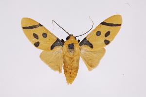 (Emurena - INB0004243332)  @15 [ ] Copyright (2012) B. Espinoza Instituto Nacional de Biodiversidad