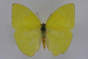 (Rhabdodryas - INB0004248598)  @15 [ ] CreativeCommons - Attribution Non-Commercial Share-Alike  National Biodiversity Institute of Costa Rica National Biodiversity Institute of Costa Rica