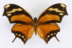 (Consul - INB0004265363)  @15 [ ] CreativeCommons - Attribution Non-Commercial Share-Alike  National Biodiversity Institute of Costa Rica National Biodiversity Institute of Costa Rica
