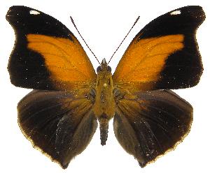 (Historis - INB0004153516)  @15 [ ] Copyright (2011) J. Montero Instituto Nacional de Biodiversidad