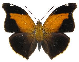 (Historis - INB0004269929)  @15 [ ] Copyright (2011) J. Montero Instituto Nacional de Biodiversidad
