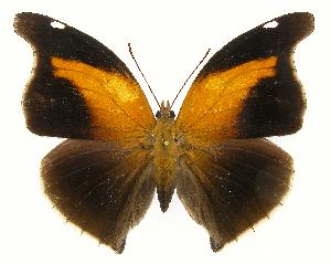 (Historis - INB0004270278)  @15 [ ] Copyright (2011) J. Montero Instituto Nacional de Biodiversidad