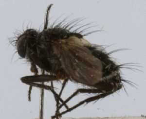 (Chaetonopsis - INBIOCRI002452981)  @11 [ ] Unspecified (default): All Rights Reserved  Unspecified Unspecified