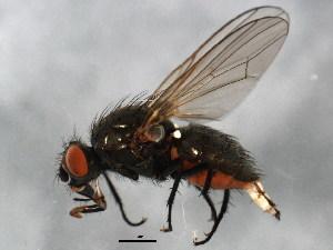 (Paregle - BIOUG01402-C03)  @14 [ ] CreativeCommons - Attribution Non-Commercial Share-Alike (2012) BIO Photography Group Biodiversity Institute of Ontario