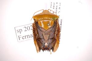 (Edessa JAMFernandessp202 - INB0003977316)  @11 [ ] Copyright (2012) Jim Lewis Instituto Nacional de Biodiversidad