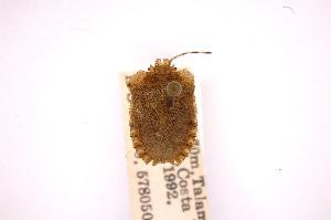 (Dryptocephala - INBIOCRI000734798)  @12 [ ] Copyright (2012) Jim Lewis Instituto Nacional de Biodiversidad