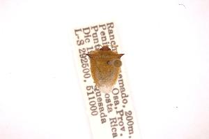 (Odmalea - INBIOCRI000920704)  @12 [ ] Copyright (2012) Jim Lewis Instituto Nacional de Biodiversidad
