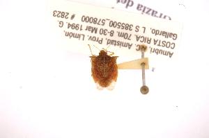 (Lattinidea - INBIOCRI001792022)  @11 [ ] Copyright (2012) Jim Lewis Instituto Nacional de Biodiversidad