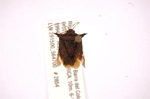 (Sibaria - INBIOCRI001794515)  @12 [ ] Copyright (2012) Jim Lewis Instituto Nacional de Biodiversidad