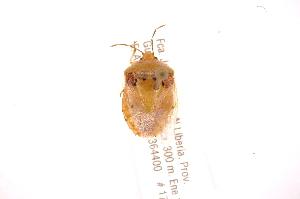 (Grazia - INBIOCRI001975249)  @11 [ ] Copyright (2012) Jim Lewis Instituto Nacional de Biodiversidad