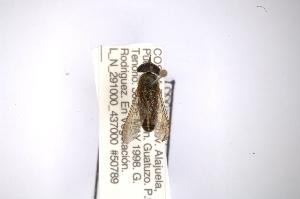 (Tabanus unistriatus - INB0003013842)  @11 [ ] Copyright (2012) M. Zumbado Instituto Nacional de Biodiversidad