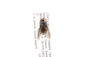 (Chloroprocta - INB0003498680)  @13 [ ] Copyright (2012) J. Vargas Instituto Nacional de Biodiversidad