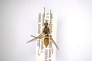 ( - INBIOCRI001924290)  @12 [ ] Copyright (2012) M. Zumbado Instituto Nacional de Biodiversidad