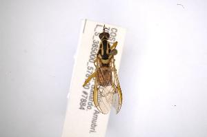( - INBIOCRI002446400)  @12 [ ] Copyright (2012) M. Zumbado Instituto Nacional de Biodiversidad