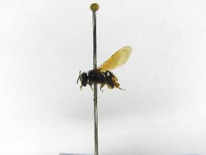 (Meliwillea - INB0003072959)  @11 [ ] Copyright (2012) Braulio Hernandez Instituto Nacional de Biodiversidad