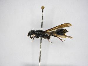 (Nortonia - INB0003132954)  @11 [ ] Copyright (2012) Braulio Hernandez Instituto Nacional de Biodiversidad