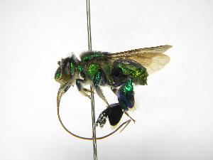 ( - INB0003478329)  @11 [ ] Copyright (2012) Braulio Hernandez Instituto Nacional de Biodiversidad