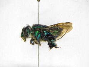 ( - INB0003881437)  @11 [ ] Copyright (2012) Braulio Hernandez Instituto Nacional de Biodiversidad