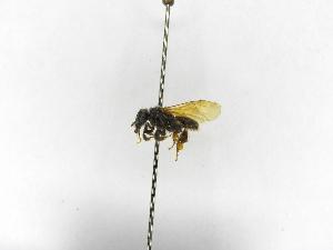 (Meliwillea - INB0003891947)  @11 [ ] Copyright (2012) Braulio Hernandez Instituto Nacional de Biodiversidad