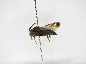 (Mesocheira - INB0003956704)  @13 [ ] Copyright (2012) Braulio Hernandez Instituto Nacional de Biodiversidad