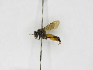 ( - INB0004049347)  @13 [ ] Copyright (2012) Braulio Hernandez Instituto Nacional de Biodiversidad