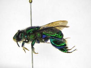 ( - INB0004240310)  @11 [ ] Copyright (2012) Braulio Hernandez Instituto Nacional de Biodiversidad